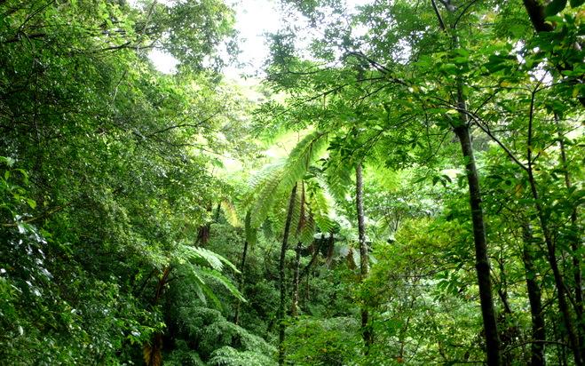 4.手つかずの原生林が残る
