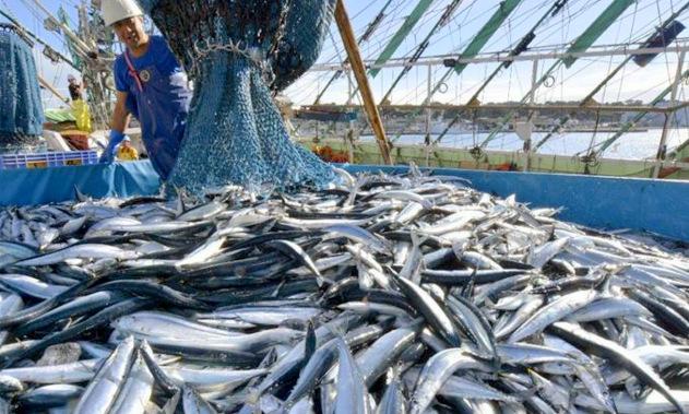 福島県沖では、一部の魚種をのぞき漁業がはじまっている